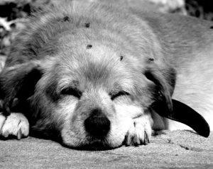 Si estás agotado, cansado y no tienes ganas, no enetrenes la electroestimulación. https://www.electroestimulaciondeportiva.com/